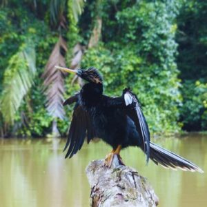Boat Tour From Puerto Limon to Tortuguero Canal