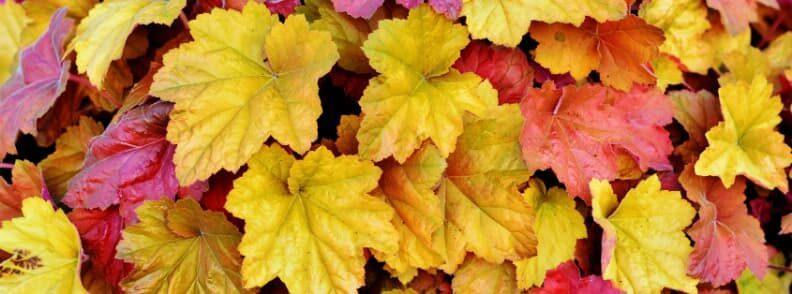 autumn foliage in massachusetts
