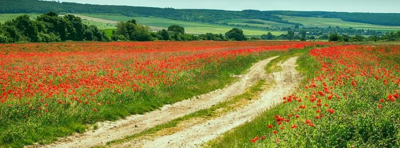 balkan road trip poppies