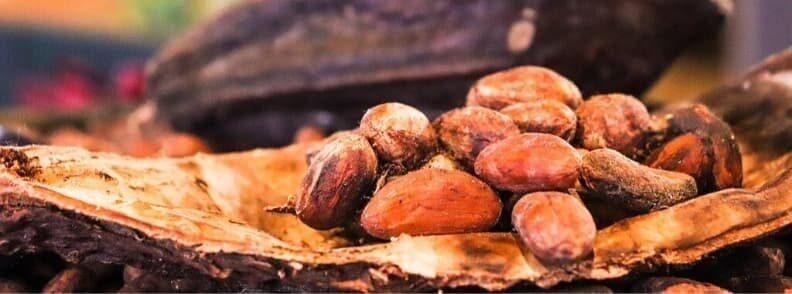 belgian chocolate cocoa beans