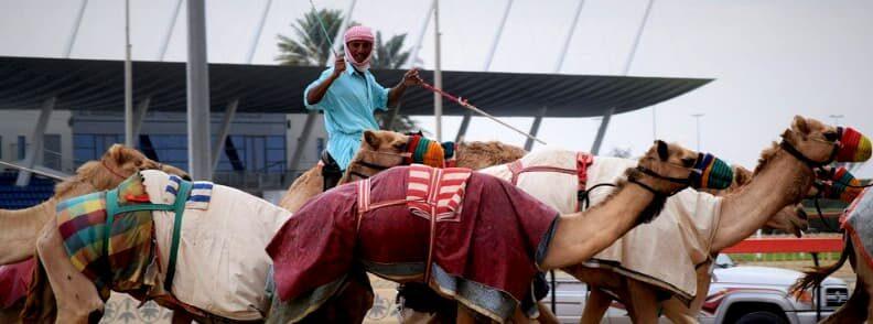 camel racing dubai budget travel