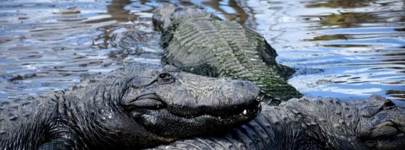 gatorland orlando trip
