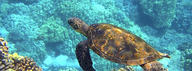 hawaii romantic weekend getaways for two