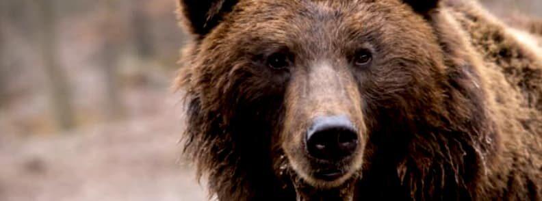 libearty zarnesti brown bear sanctuary romania