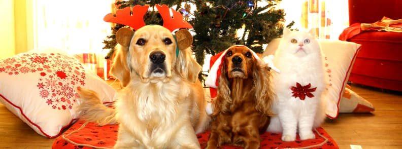 pet and small animals christmas