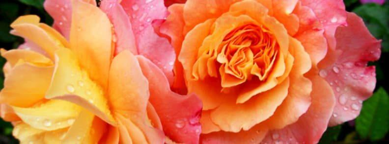 roseto comunale rose garden rome holiday itinerary