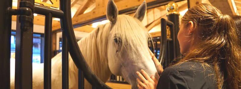 spanish riding school vienna lipizzaners horses