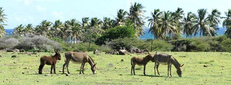 st kitts nevis caribbean destinations