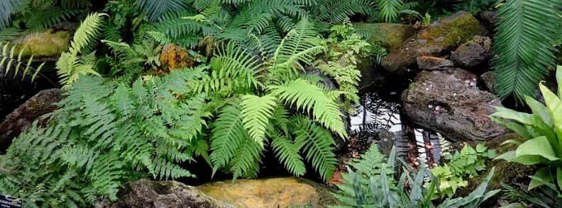 us botanic garden primeval