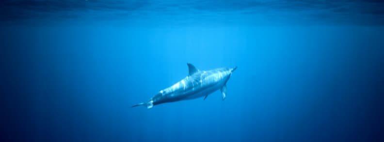 hawaii vacations lanai island dolphin