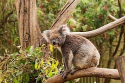 2 day Kangaroo Island tour safari from Adelaide Australia