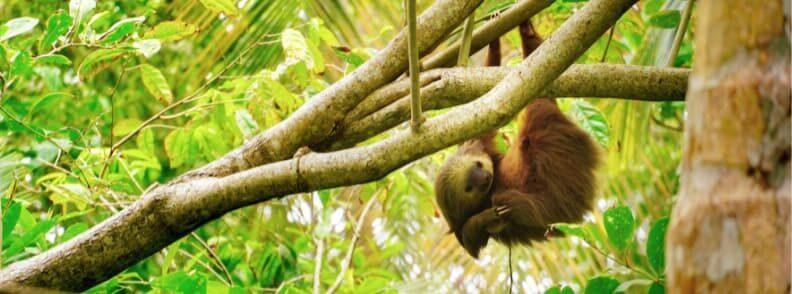 visit Limon Costa Rica